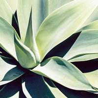 Succulent Fine Art Print