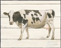Country Cow VI Framed Print