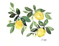Lemons and Leaves Fine Art Print
