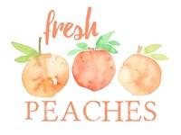 Fresh Peaches II Fine Art Print