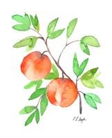 Two Watercolor Peaches Fine Art Print
