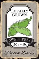 Sweet Peas Fine Art Print