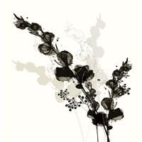 B&W Floral III Framed Print