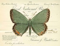 Butterfly Green Fine Art Print