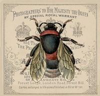 Red Bee Fine Art Print