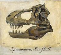 Tyrannosaurus Rex Skull Framed Print
