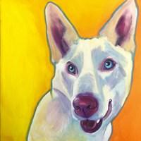 Husky - Charlie Fine Art Print