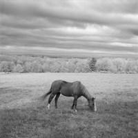 Lone Horse Fine Art Print