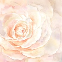 Blush Rose Closeup I Framed Print