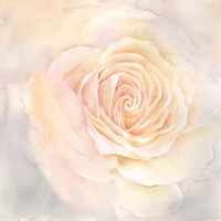 Blush Rose Closeup III Fine Art Print