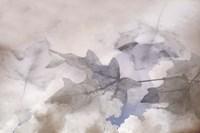 Shadow Leaves Fine Art Print