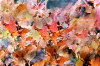 Fall's Folly Fine Art Print