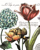 Botanical Postcard Color IV Fine Art Print