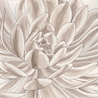 Desert Succulent I Fine Art Print