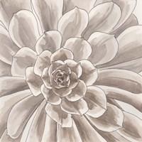 Desert Succulent II Fine Art Print