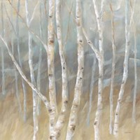 Silver Birch Square Fine Art Print