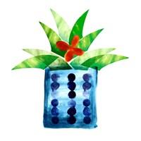 Colorful Cactus VII Fine Art Print