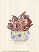 Seashell Collection III Framed Print