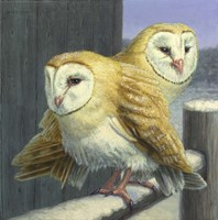 Barn Owl Couple Fine Art Print