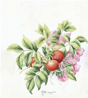 2007 Rose Hips Fine Art Print