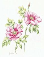 2007 Wild Roses Fine Art Print
