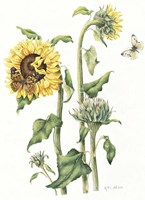 October Sunflower Fine Art Print