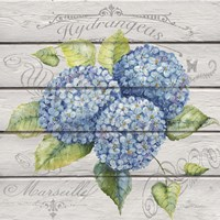 Blue Hydrangeas Framed Print