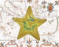 Nautical Treasures-J Fine Art Print