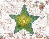 Nautical Treasures-L Fine Art Print