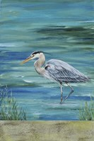 Great Blue - Heron - 1 Fine Art Print