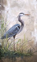 In The Reeds - Blue Heron - A Framed Print
