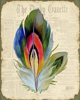 Elegant Feather - B Fine Art Print