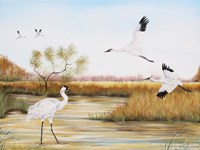Whooping Cranes - A Fine Art Print