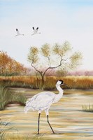 Whooping Cranes - B Fine Art Print