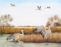 Sandhill Cranes - A Fine Art Print