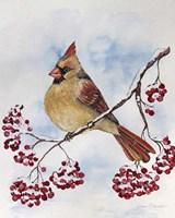 Cardinal And Winter Berries - B Fine Art Print
