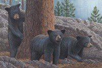 Black Bear Cub Trio Fine Art Print