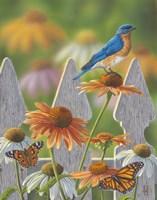 Bluebird Butterflies Cone Flowers Fine Art Print