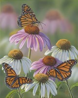Three Monarchs Fine Art Print