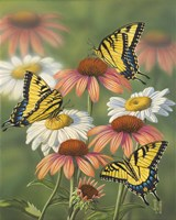 Yellow Tiger Swallowtails Fine Art Print