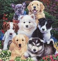 Precious Puppies Fine Art Print