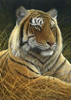 Sumatran Tiger Fine Art Print