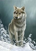 Wolf On The Ridge Fine Art Print