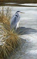 Winter Heron Fine Art Print