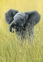 Elephant In The Grass Fine Art Print