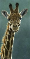 Giraffe Beauty Fine Art Print