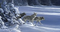The Strength Of The Wolf Is The Pack Fine Art Print