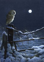 Silent Night Barn Owl Fine Art Print