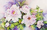 Peonies with Pink Centers Fine Art Print