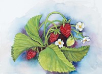 Strawberry Patch - E. Sample Berries Fine Art Print